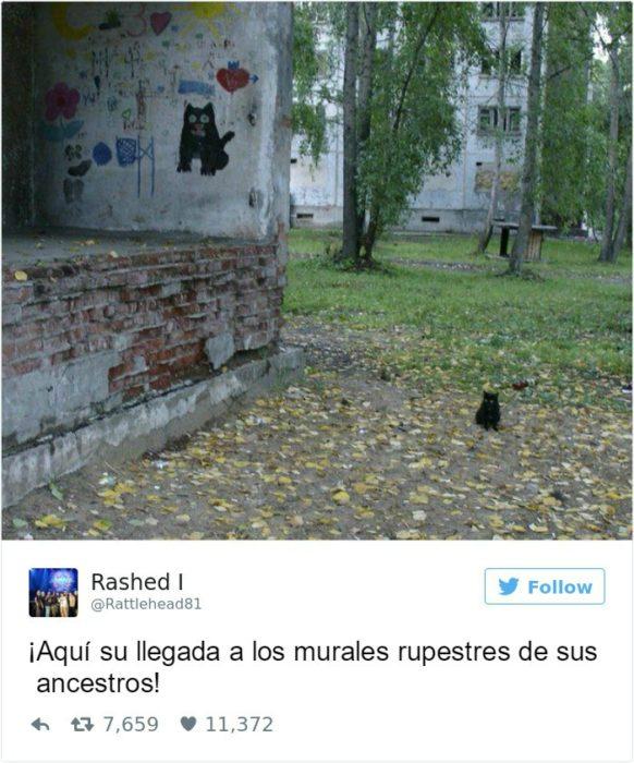 Captura de pantalla Twitter gato al lado de una pared