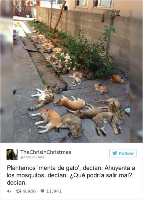 Captura de pantalla Twitter gatos acostados en el suelo