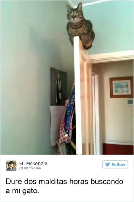 Captura de pantalla Twitter gato arriba de una puerta