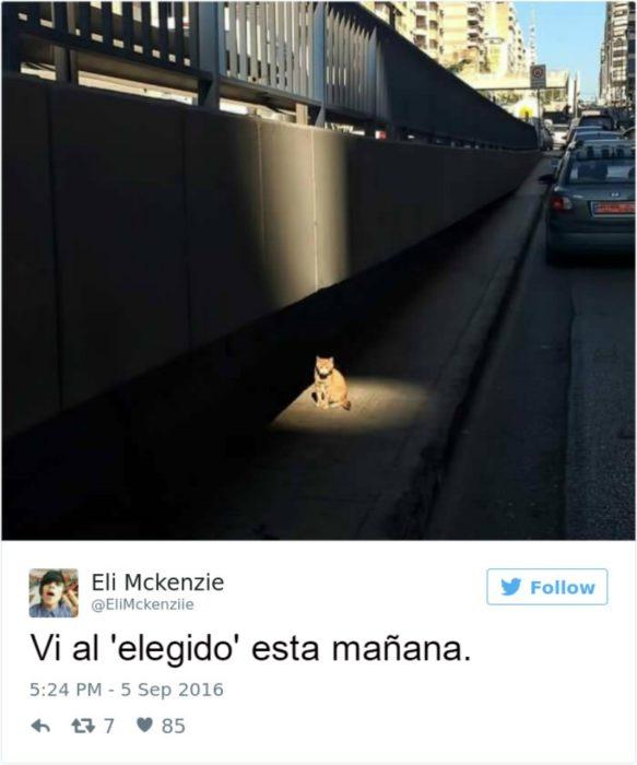 Captura de pantalla Twitter gato bajo una luz en la calle