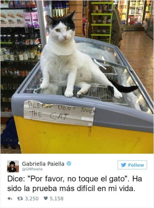 Captura de pantalla Twitter gato arriba de refrigerador