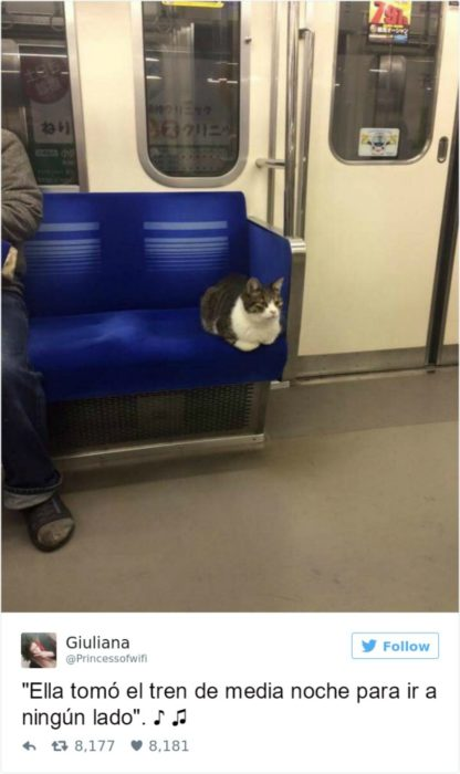 Captura de pantalla Twitter gato sentado en un tren