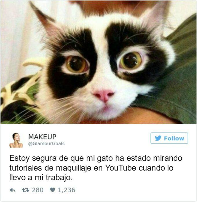 Captura de pantalla Twitter gato con ojos negros