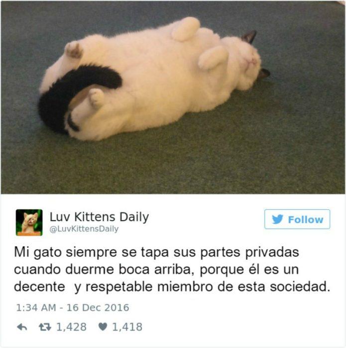 Captura de pantalla Twitter gato acostado boca arriba