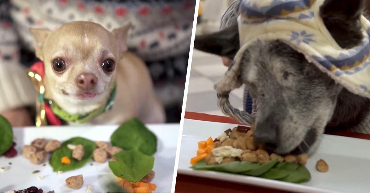Animales de un refugio animal disfrutaron de una deliciosa cena de navidad y es lo más adorable