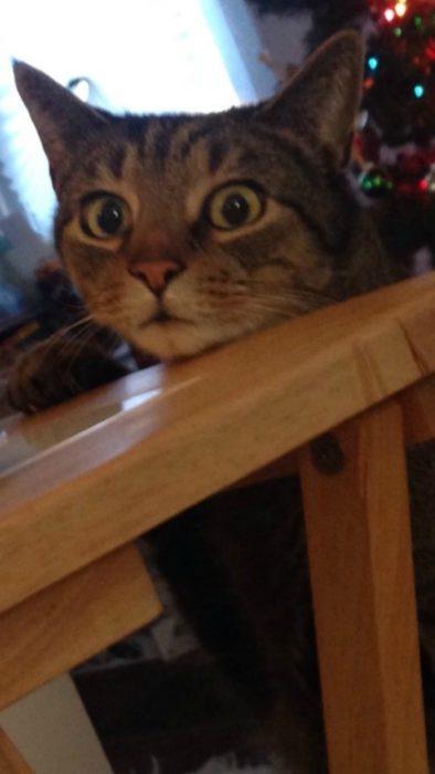 gato con cara de asustado