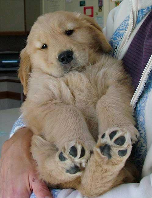 Cachorro 7
