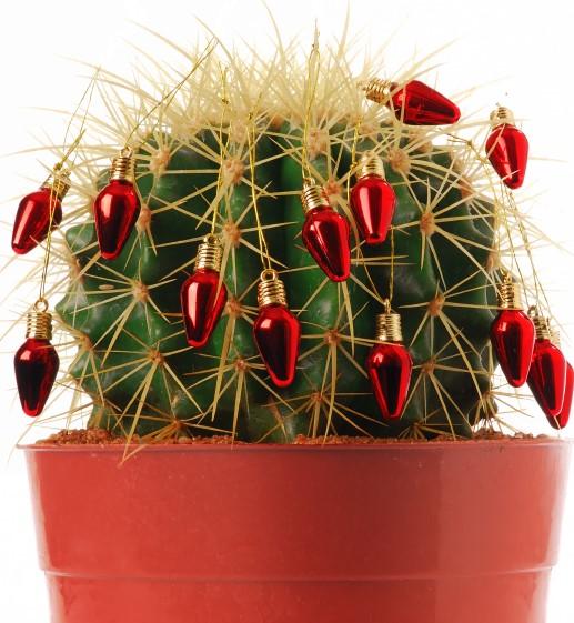 cactus con luces navideñas rojas