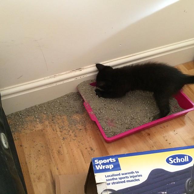 Gato jugando con su arenero