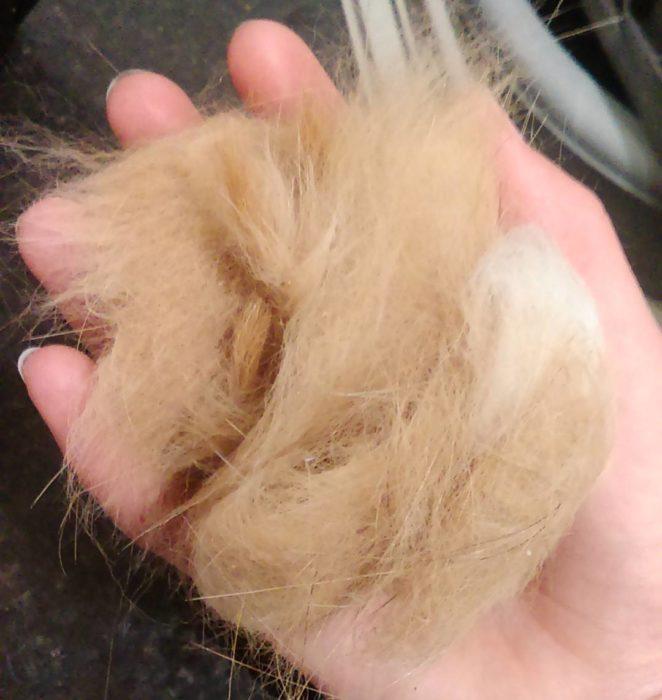 Bola de pelos de un gato