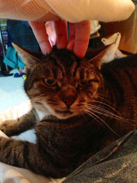 Chica acariciando a un gato enojado
