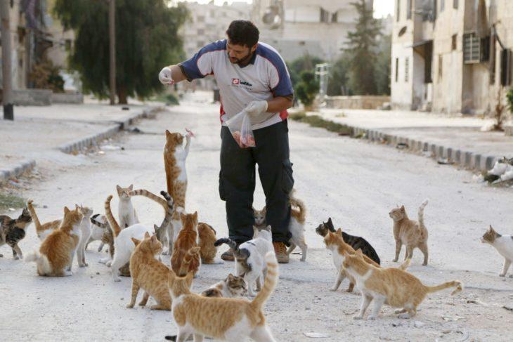 hombre alimenta a una decena de gatos
