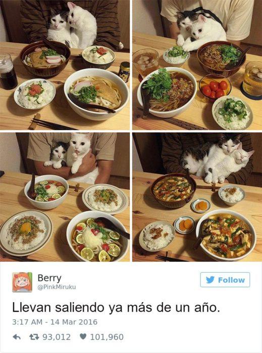 Captura de pantalla Twitter gatos abrazados en una mesa con comida