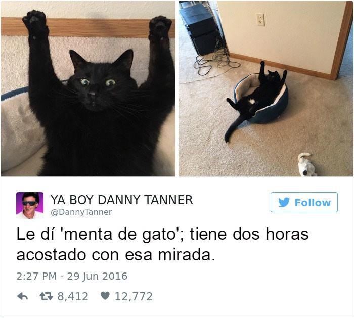 Captura de pantalla Twitter gato sorprendido acostado en un sillon