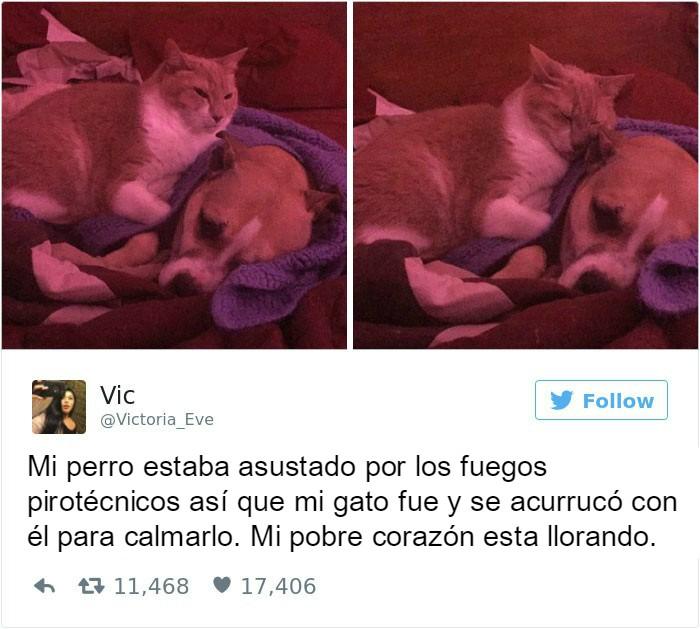 Captura de pantalla Twitter gato al lado de un perro