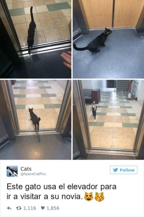 Captura de pantalla Twitter gato saliendo de un elevador