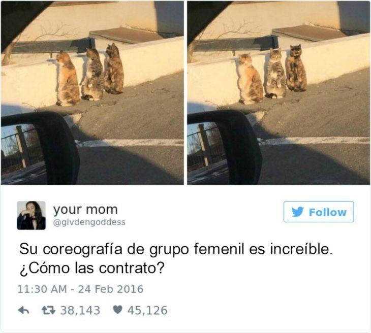Captura de pantalla Twitter gatos tras una parde