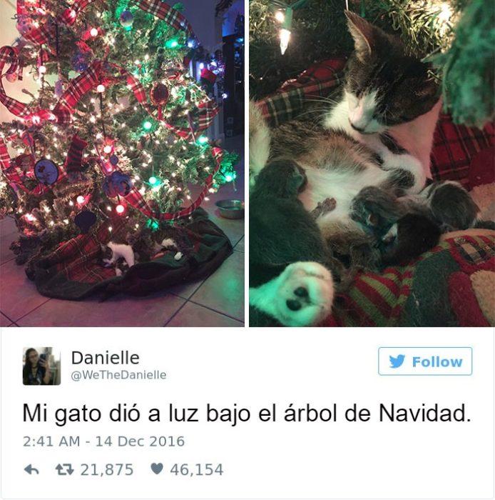 Captura de pantalla Twitter gato bajo un arbol y cachorros