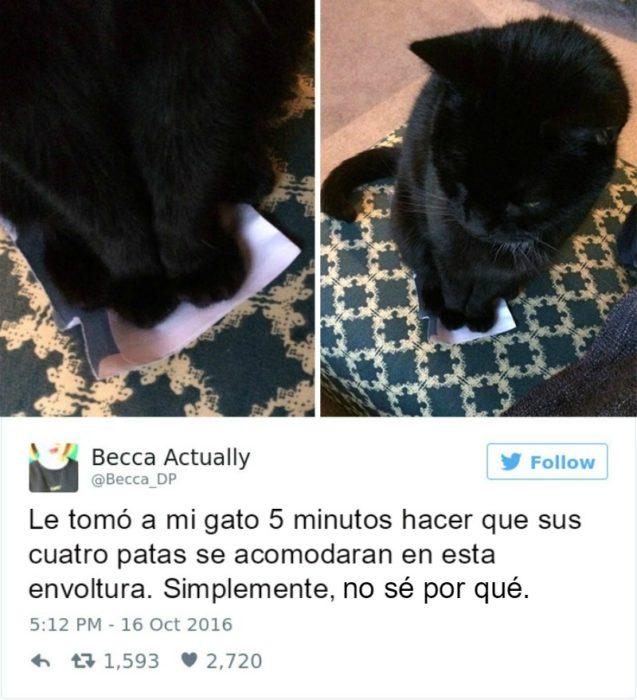 Captura de pantalla Twitter gato parado arriba de una envoltura