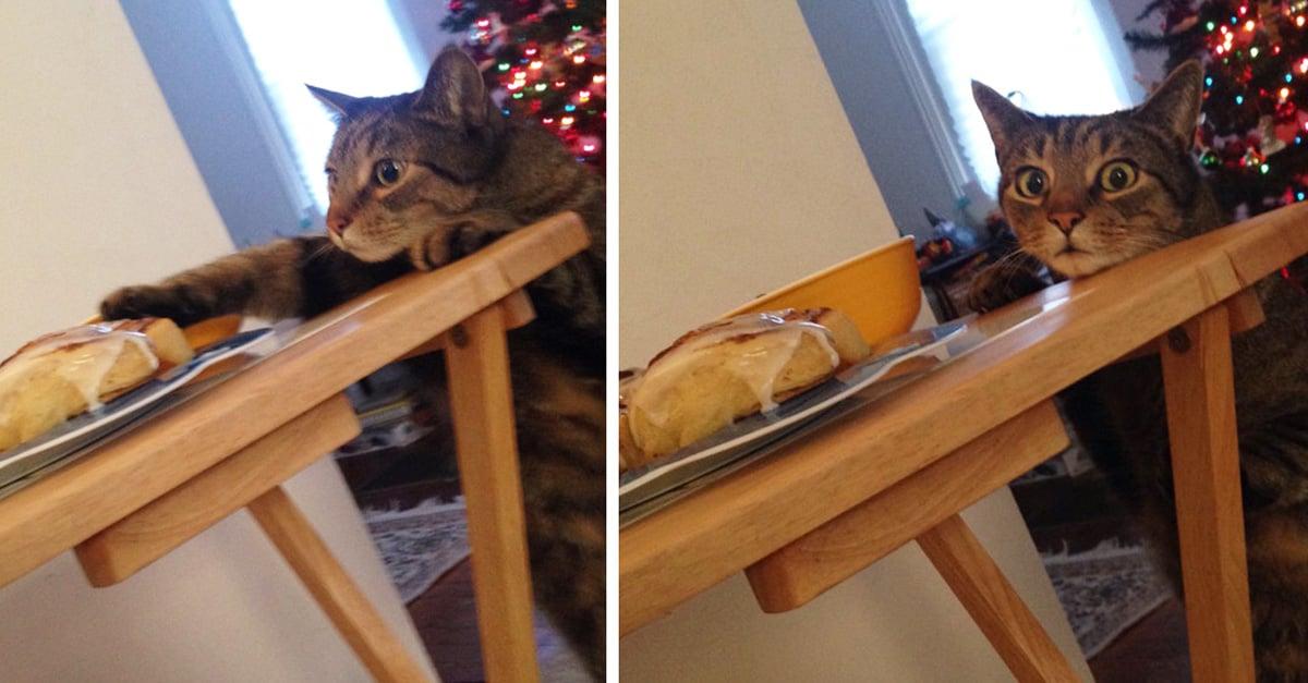Internet ríe con este gato que fue sorprendido robando pan y su cara de culpabilidad lo dice todo