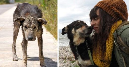 15 historias de animales que te harán recobrar la fe en la humanidad