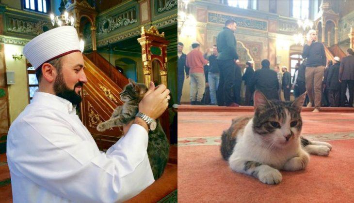 hombre carga a un gato y gato acostado en alfombra
