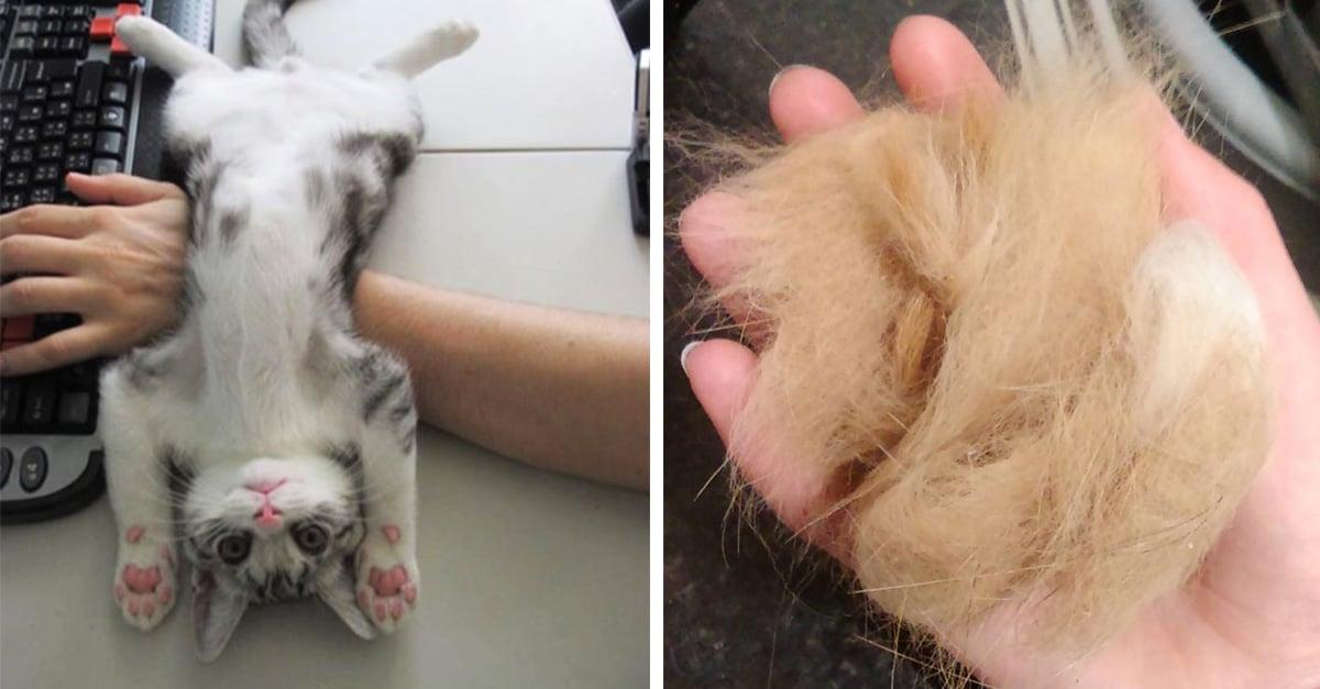 15 'primeras veces' que todas las dueñas de gatos experimentan