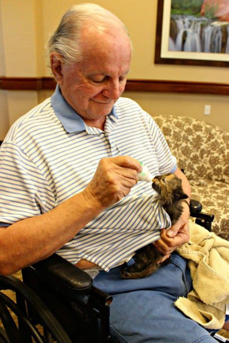 hombre alimenta a pequeño gato