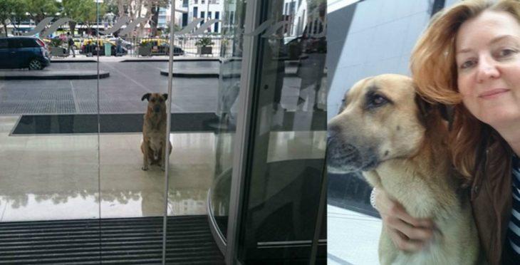 perro afuera de una puerta y mujer rubia
