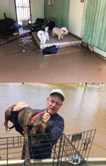 hombre rescata a perros en inundación