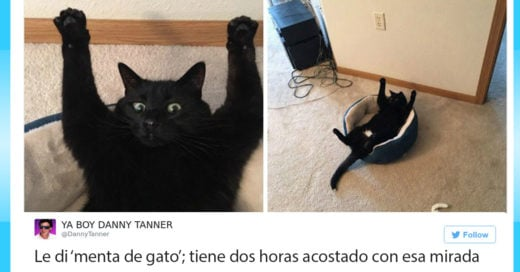 Los 20 mejores tuits donde los gatos nos hicieron sonreír durante el 2016