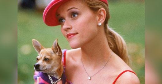 15 Frases que no le debes decir a un amante de los perros
