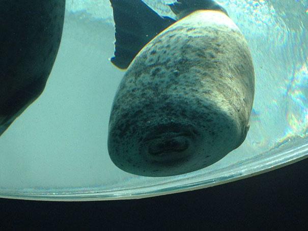 GIF Cara de una foca estampada en un vidrio