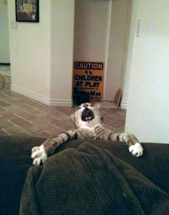 Gato cayendo por un sofá