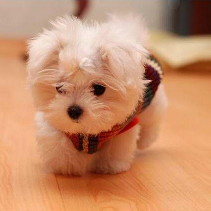 perro pequeño