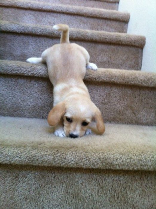 perro bajando las escaleras