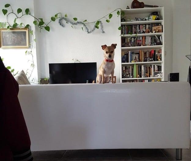 perro arriba del sillon