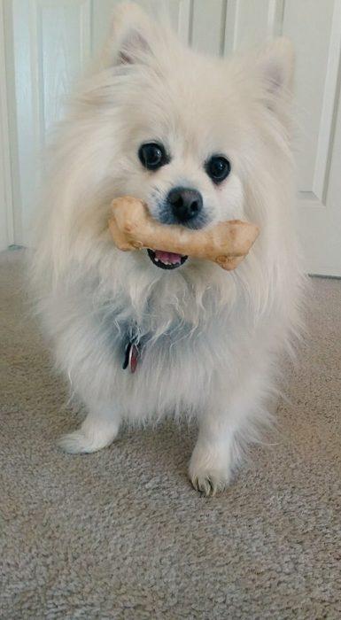 perro con hueso en el osico