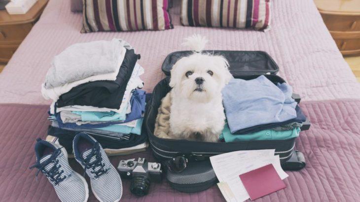perro adentro de la maleta