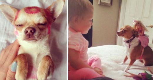 20 situaciones que solo entienden las chicas que tienen un perro pequeño