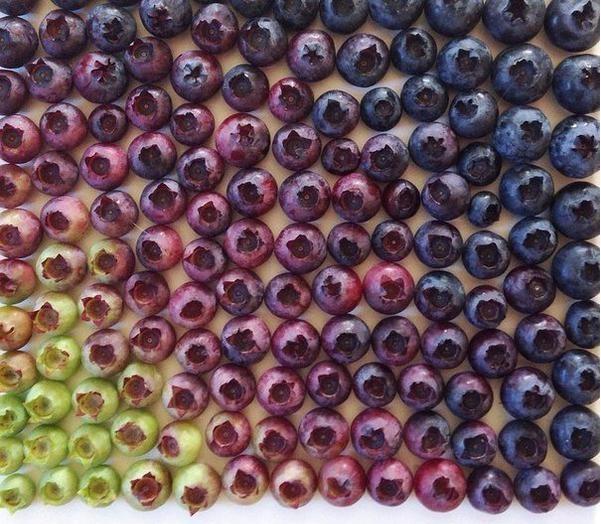 uvas degradadas