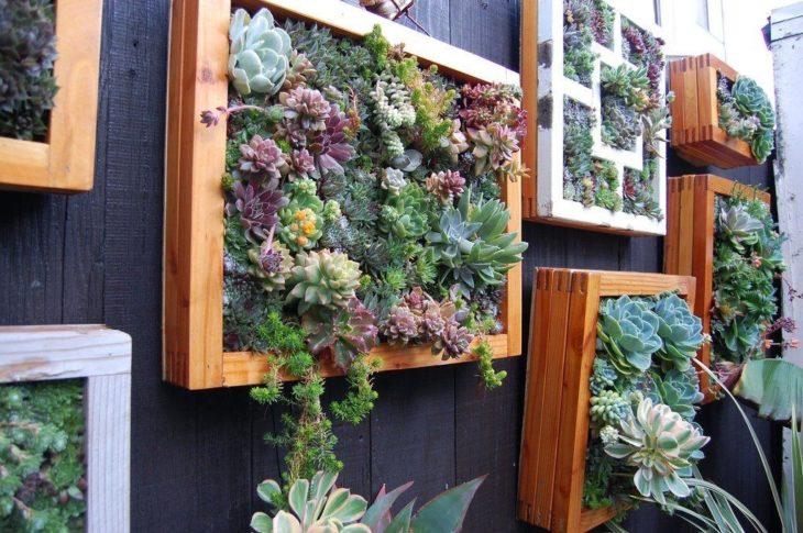 pared hecha de plantas por suculentas