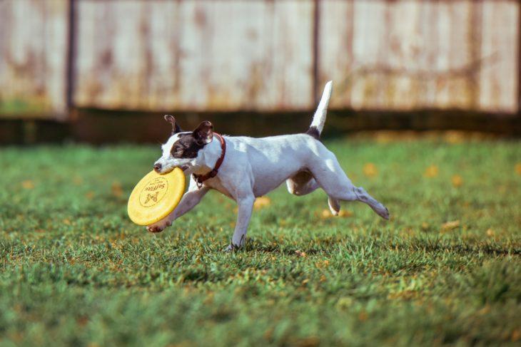 perro jugando y corriendo