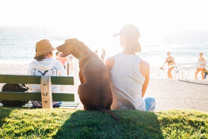 perro sentado en la playa