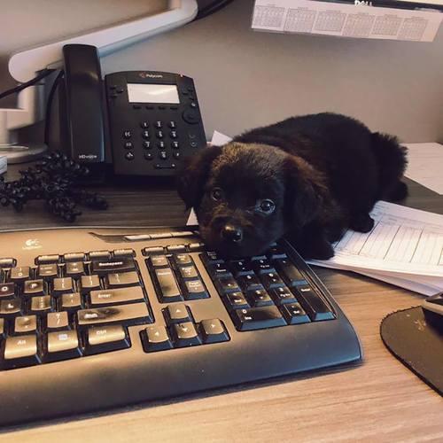 perro quieto sobre el escritorio