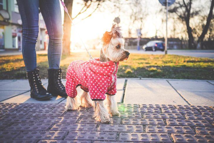 chica caminando con su perro