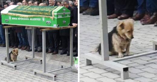 Este perro no quiere separarse de su papá humano, y esta conmoviendo a todo Internet