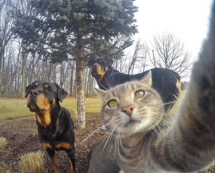 Gato se toma selfies