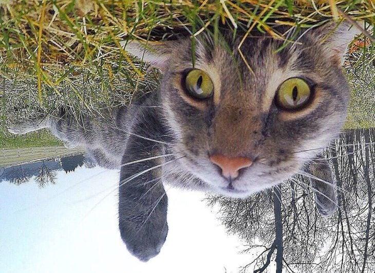 gato que se toma selfies