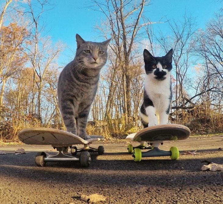 Gato que se toma selfies con una cámara GoPro